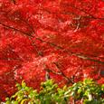 燃え立つ秋