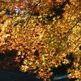 陽だまりの秋